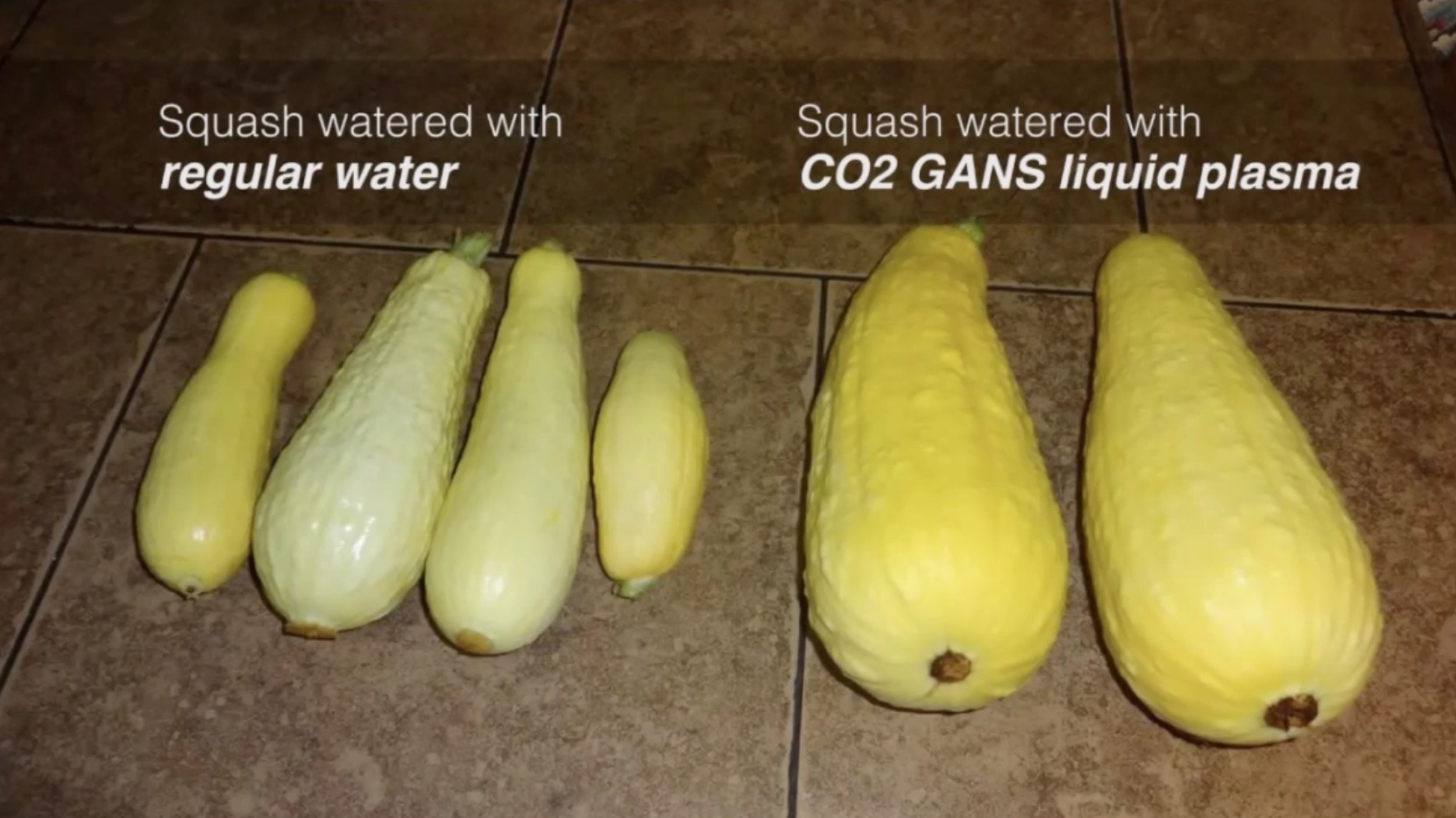 Squash with GANS