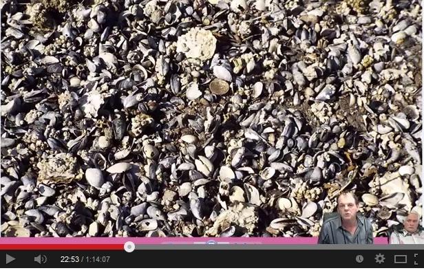 BC Dead Sealife post Fukushima